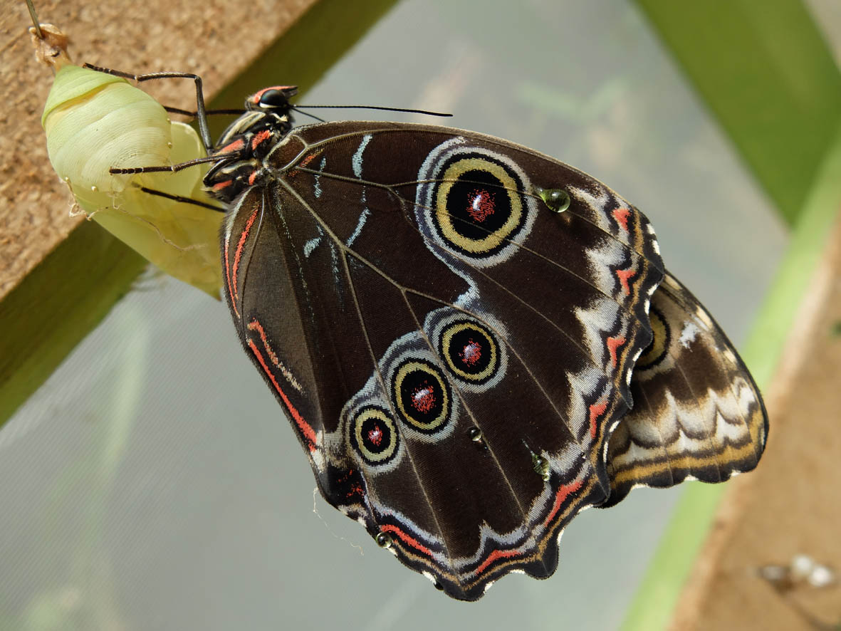 Butterfly emerging symbol of change